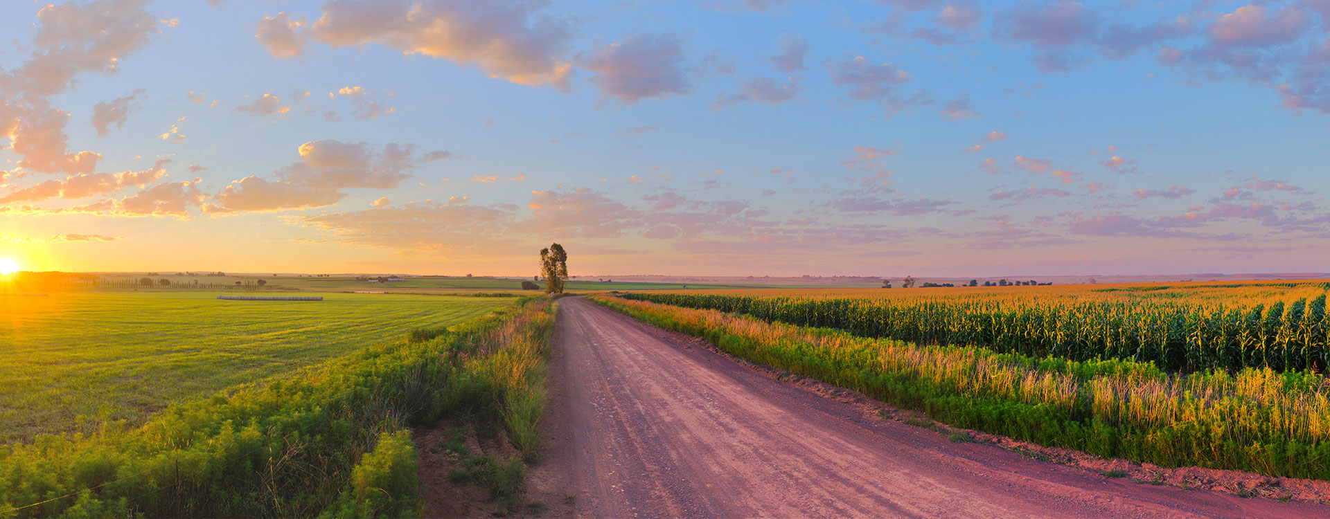 slider-corn-field